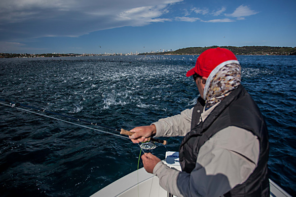 Sensational fishing in Sydney Harbour