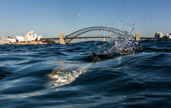 Aussie salmon almost beaten